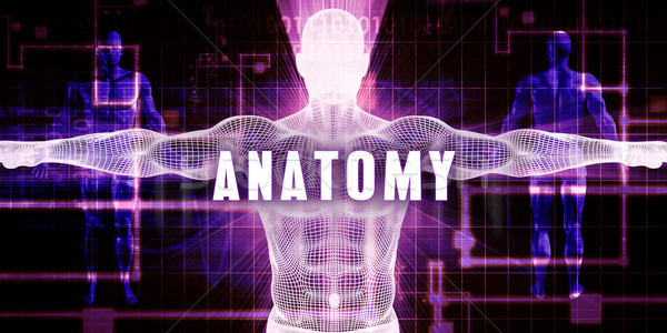 Anatomy Stock photo © kentoh