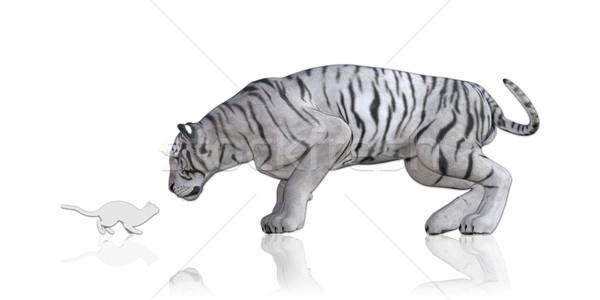 Cat Tiger Reflection Stock photo © kentoh