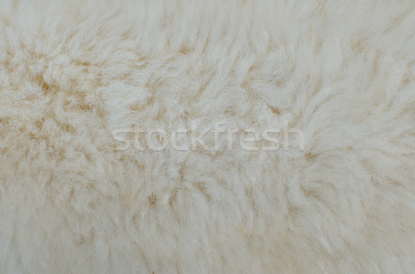 wool sheep background Stock photo © Kheat