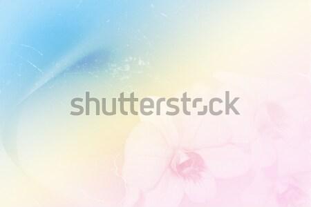Orquídeas grunge estilo retro gradiente flor primavera Foto stock © Kheat