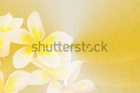 plumeria in soft and blur style on paper texture background Stock photo © Kheat