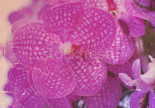 Orchideák grunge retró stílus virág tavasz esküvő Stock fotó © Kheat
