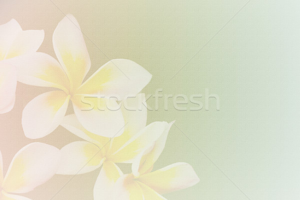 ぼかし 紙のテクスチャ ソフト スタイル 花 紙 ストックフォト © Kheat