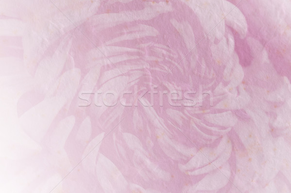 flower retro soft style for background Stock photo © Kheat