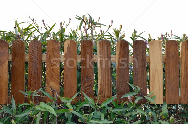 plant with wooden fencing isolated on white Stock photo © Kheat