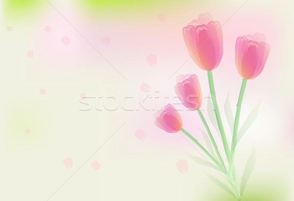 チューリップ 花 花弁 抽象的な ソフト 花 ストックフォト © Kheat