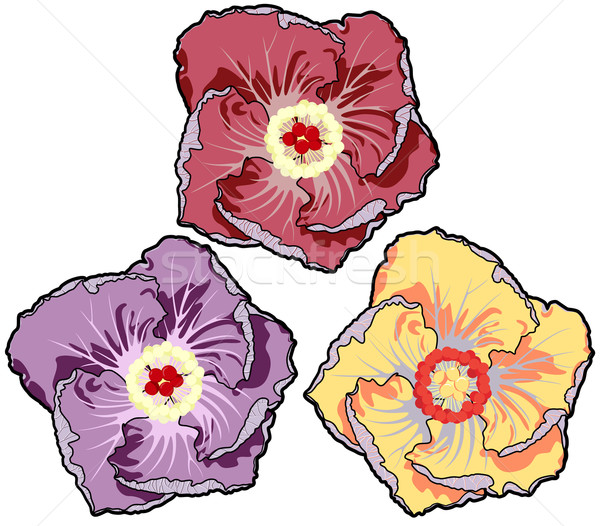 çiçekler doğa dizayn doğum günü bahçe yaz Stok fotoğraf © khvost