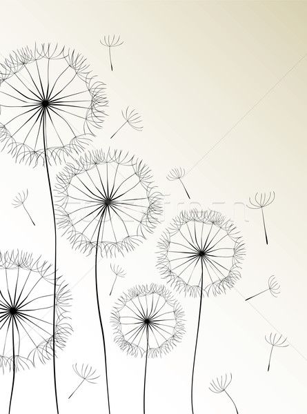 Stock photo: Dandelions card