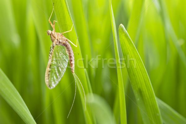 Trawy posiedzenia zwierząt makro owadów blisko Zdjęcia stock © Kidza