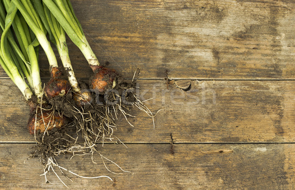 Spring onions Stock photo © Kidza