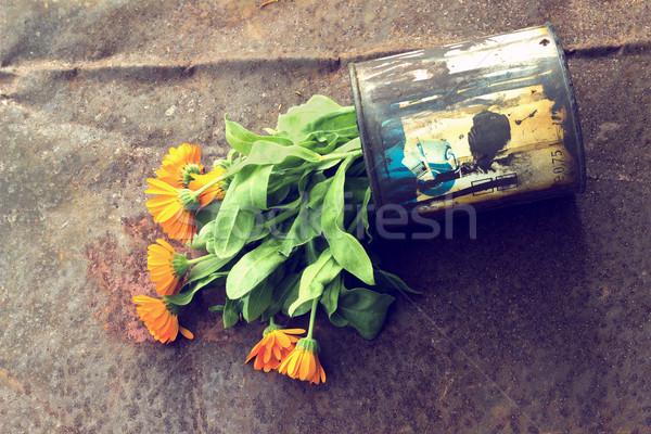 можете старые ржавые цветок медицинской Сток-фото © Kidza