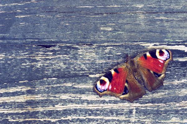 Kelebek ahşap yüzey tavuskuşu bağbozumu Stok fotoğraf © Kidza