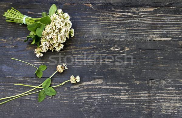 Virág lóhere virágcsokor fehér fából készült kert Stock fotó © Kidza
