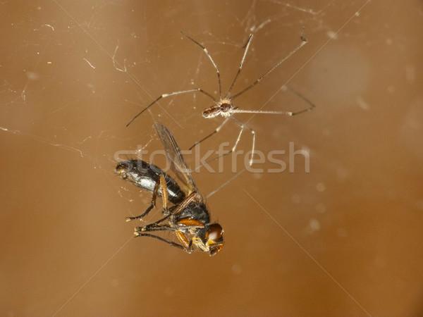 Spider preda volare morte mangiare macro Foto d'archivio © Kidza