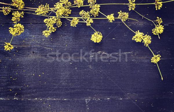 Voorjaar oude bloemen hout Stockfoto © Kidza