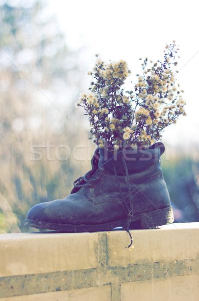 Drogen bloemen boot oude laarzen Stockfoto © Kidza