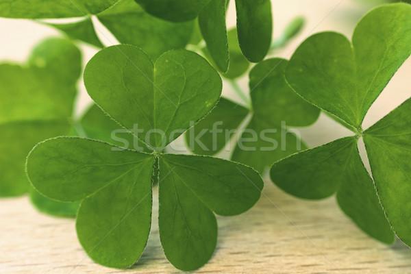 Vert trèfle feuille bois fond objet Photo stock © Kidza