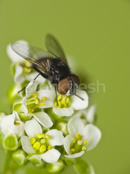 Volar flor flor blanca cuerpo fondo piernas Foto stock © Kidza