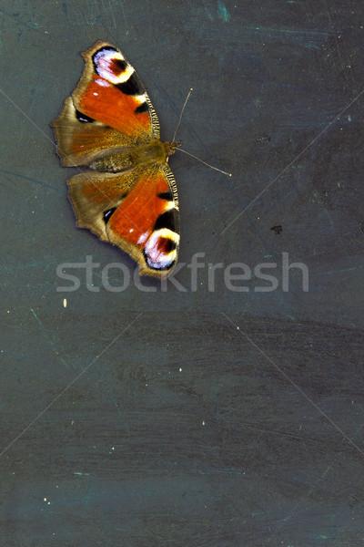 カラフル 蝶 暗い 木製のテーブル 表面 壁 ストックフォト © Kidza