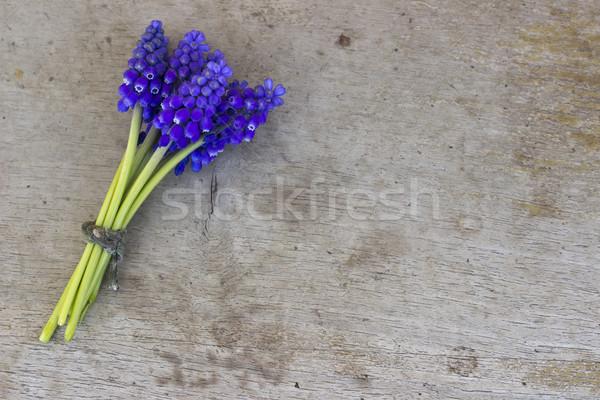 Mavi çiçek ahşap çiçek doku bahar Stok fotoğraf © Kidza