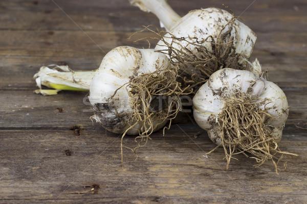 Stock photo: Organically grown garlic