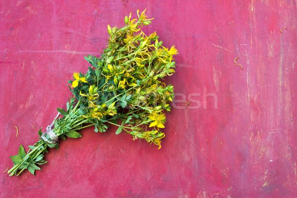 St John's wort or Hypericum perforatum Stock photo © Kidza