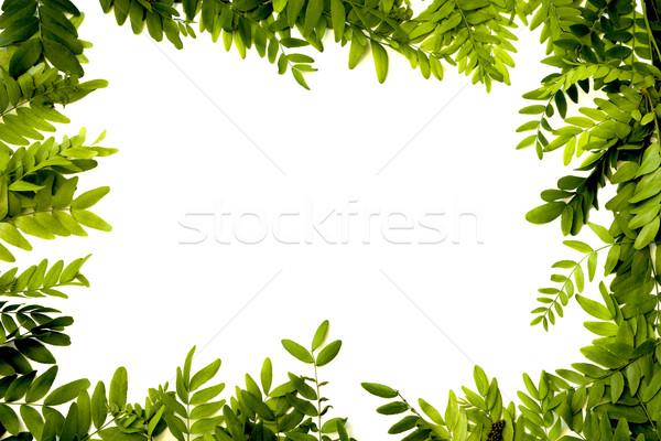 Zöld levelek keret izolált fehér fa tavasz Stock fotó © Kidza