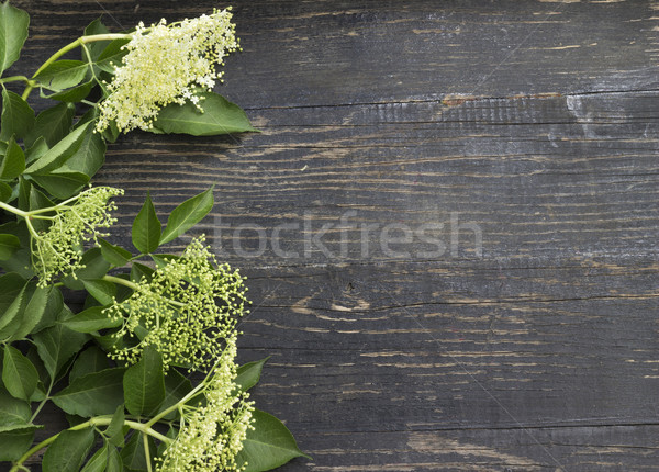 Holunder Blume Saft Zutaten Hintergrund grünen Stock foto © Kidza