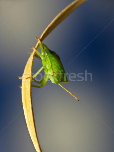 Bug Stock photo © Kidza