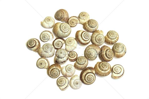 Caracol conchas branco comida concha animal Foto stock © Kidza