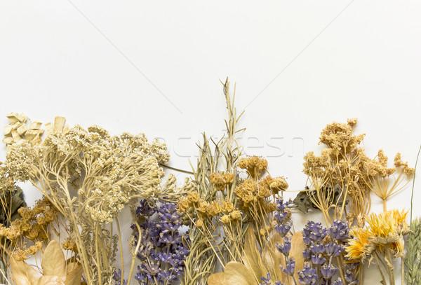 ハーブ 白 コレクション ストックフォト © Kidza
