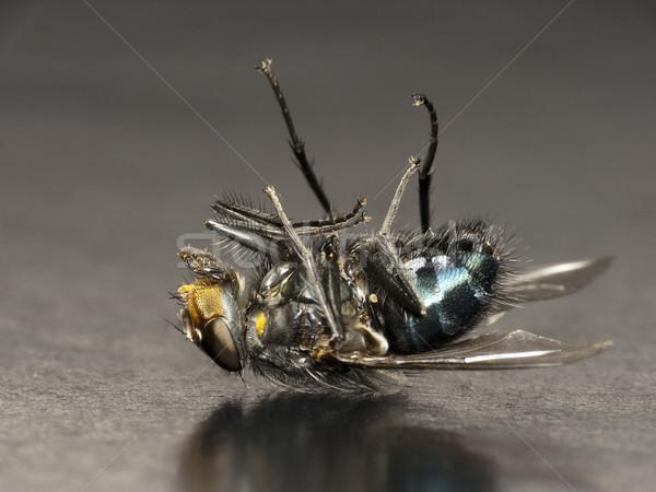 Dode vliegen achtergrond dood vleugels bug Stockfoto © Kidza