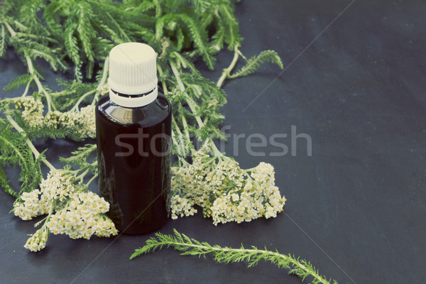 Yarrow Achillea Millefolium  Stock photo © Kidza