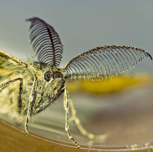 Gece kelebek ilginç doğa kafa hayvan Stok fotoğraf © Kidza