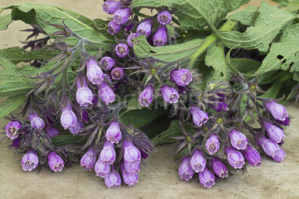 Comfrey (Symphytum officinale).Medicinal herb Stock photo © Kidza