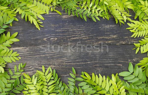Primavera frescos hojas verde árbol diseno Foto stock © Kidza