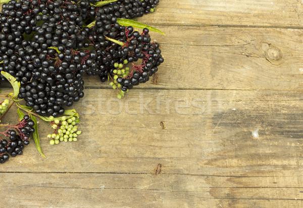 Stock photo: Elderberry fruit (Sambucus ebulus)