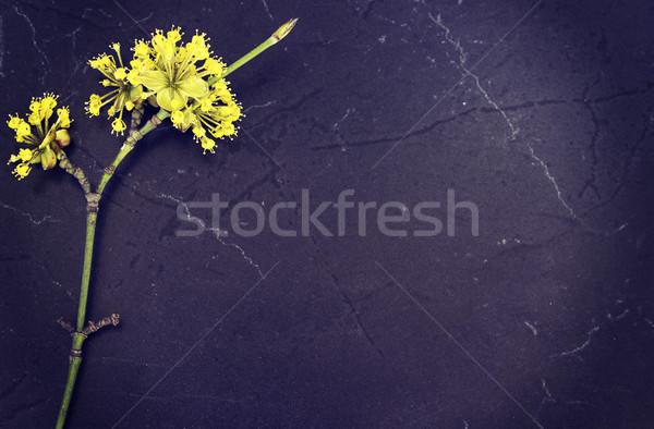 Bahar çiçekler kiraz avrupa çiçek ağaç Stok fotoğraf © Kidza