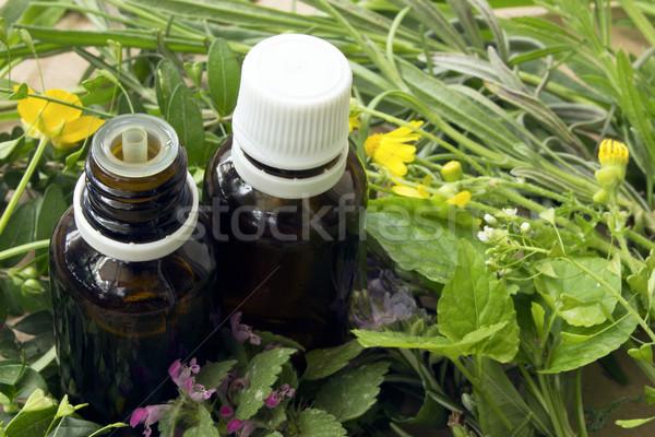 медицинской травы органический существенный Сток-фото © Kidza