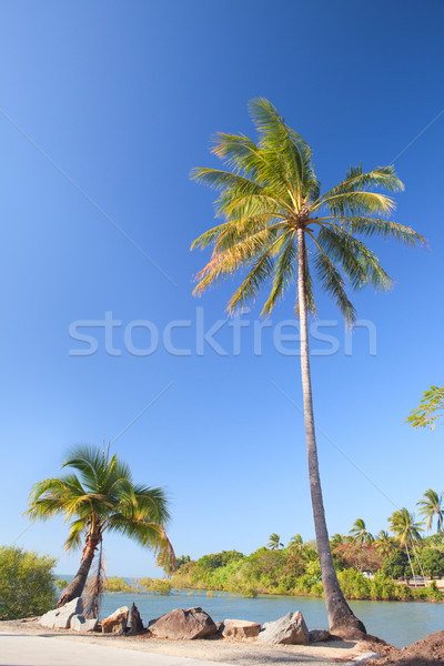 Kókuszpálma fa tengerpart kék ég kicsi természet Stock fotó © kikkerdirk