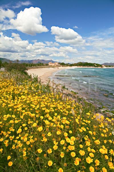 yellow spring flowers on beach  Stock photo © kikkerdirk