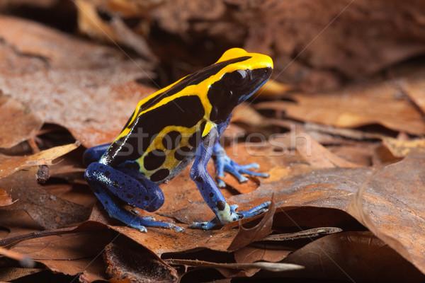 frog  Stock photo © kikkerdirk