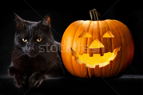 Stock photo: Halloween pumpkin black cat