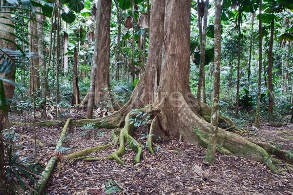 木 自然 リザーブ ツリー トランクス ストックフォト © kikkerdirk