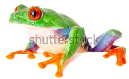 red eyed tree frog  treefrog treefrog Stock photo © kikkerdirk