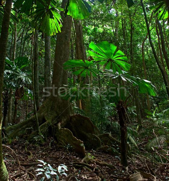tropical rainforest Stock photo © kikkerdirk