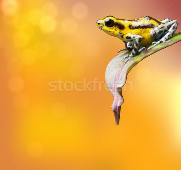 Aardbei dart kikker gif pijl blad Stockfoto © kikkerdirk