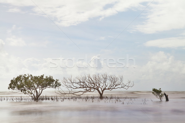 mangrove tree in blurred sea Stock photo © kikkerdirk