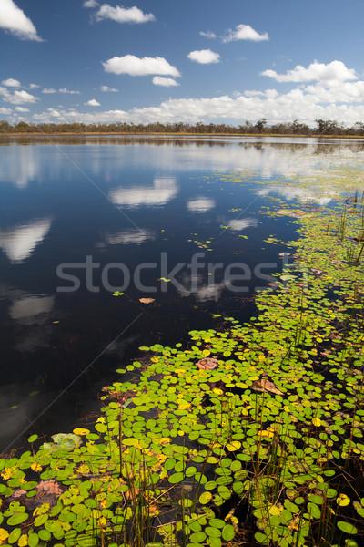 Palude lago foglie cielo blu Foto d'archivio © kikkerdirk