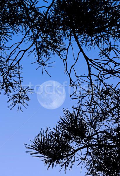 Dolunay görüntü gün ağaç ay mavi Stok fotoğraf © Kirschner